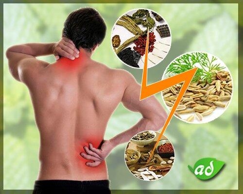 An Cốt Nam - Bài thuốc thảo dược số 1 chữa bệnh thoát vị đĩa đệm hiểu quả