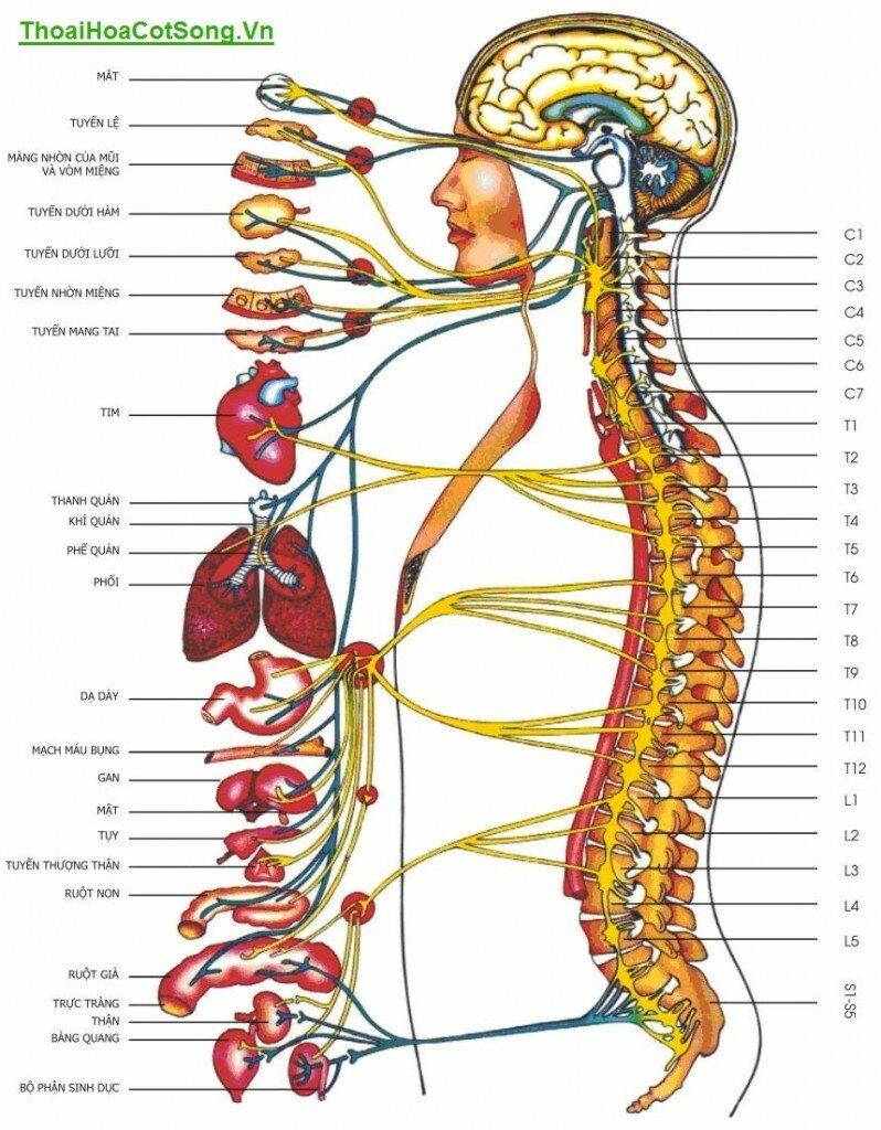 <h3>Bệnh thoái hóa cột sống thắt lưng và cổ rất nguy hiểm</h3>