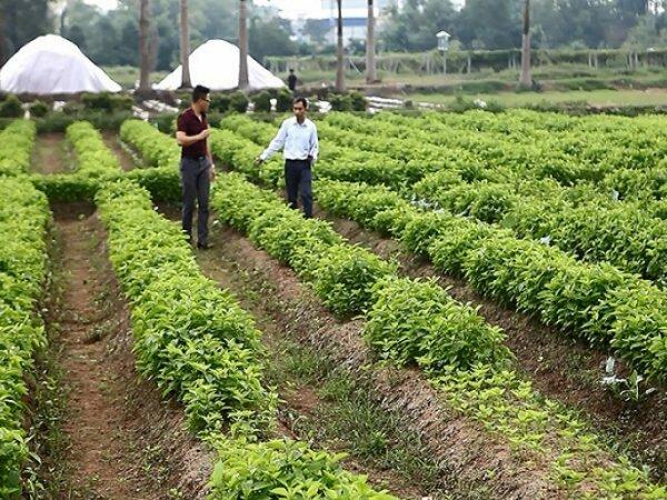 Nguồn thảo dược được trồng tại Viện Dược Liệu Của Bộ Y Tế